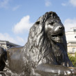 Lion statue  in Trafalgar Square — Photo