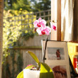 Stock Photo: Pink Orchid at windowsill