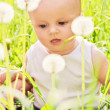 Little baby sitting in the grass and dandelions — Stock Photo