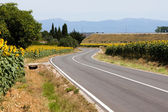 Farmland Road and sunflower on a meadow — Stock Photo