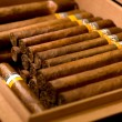 A box of cigars — Stock Photo