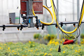 Sprinkler system inside a greenhouse irrigating plants — Stock Photo
