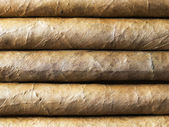 Habana cigars bacground nearest — Stock Photo
