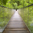 Постер, плакат: Suspension bridge in the forest