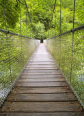 Suspension bridge in the forest — Stock Photo