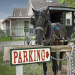 Stock Photo: Parking horse and buggy