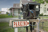 Parking horse and buggy — Stock Photo