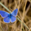 Blue butterfly — Stock Photo #12089843