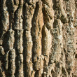 Textured deciduous tree bark — Stock Photo
