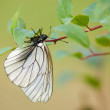White butterfly on the tree branch — Foto Stock