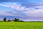 Farm field — Stock Photo
