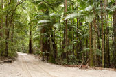Forest on the sand, Fraser Island, Australia — Stock Photo