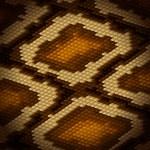 Python snake skin brown background. Vector illustration. — Stock Vector