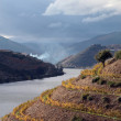 Stock Photo: Alto Douro Wine Region