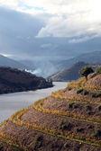 Alto douro vinhateiro — Foto Stock