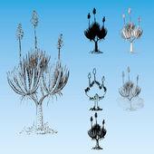 Aloe Sokotrina — Cтоковый вектор