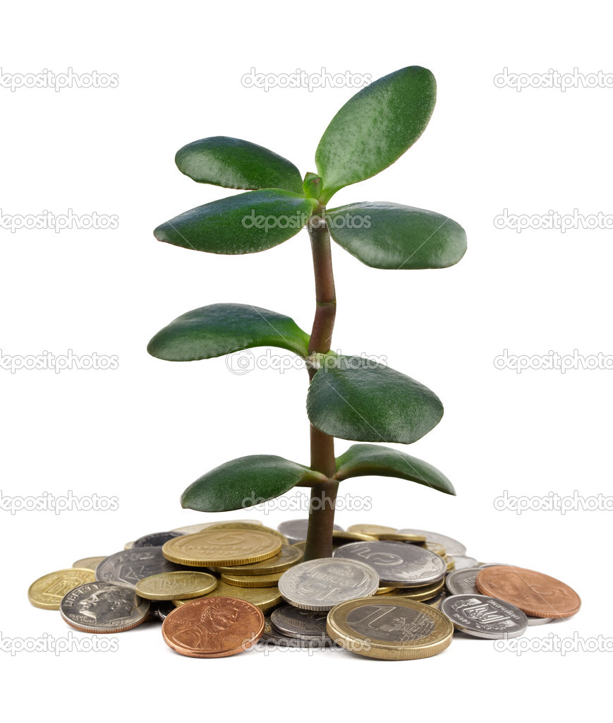 Money tree growing from heap of coins isolated — Stock Photo #10968857