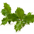 Holly leaves — Stock Photo