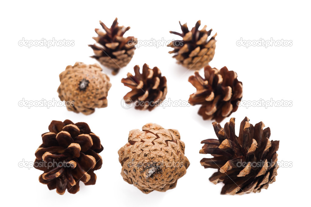 Pine cones group isolated on white — Stock Photo #11327145