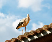 Stork on the roof of a church; — Stock Photo