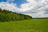 Forest, field and sky — Stock Photo