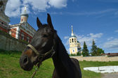 A horse on a background Elias Church — Stock Photo