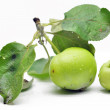 Immature green apple on a branch — Stock Photo