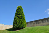 Strom v zahradě — Stock fotografie