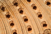 Door of the Apostles in lleida — Stock Photo