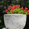 Stock Photo: Concrete planter
