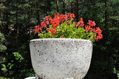 Concrete planter — Foto Stock