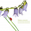 Spring flora and ladybird against white background — ストック写真