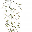 Lovely abstract image of flora against white background — Stock Photo #11084828