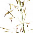 Lovely abstract image of flora against white background — Stock Photo #11084952