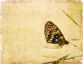 Lovely background image with floral elements and butterfly — Stock Photo