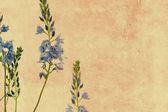 Floral background image — Foto Stock