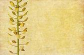 Aardse bloemen achtergrond en ontwerp element — Stockfoto