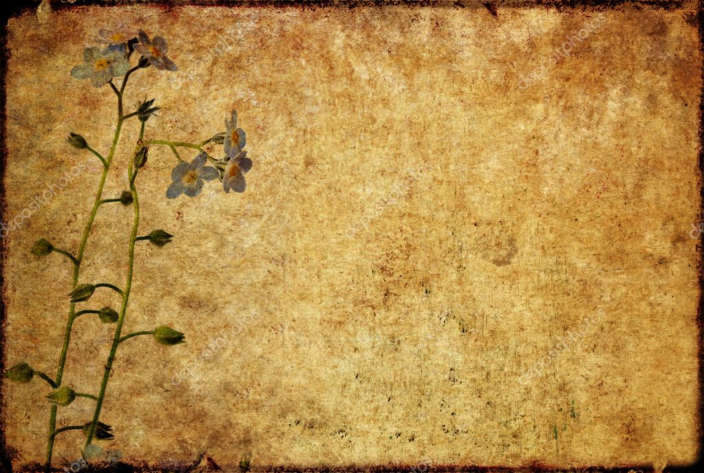 Earthy floral background image and design element — Stock Photo #11084172