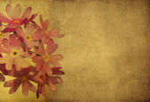 Floral background and design element — Stock Photo