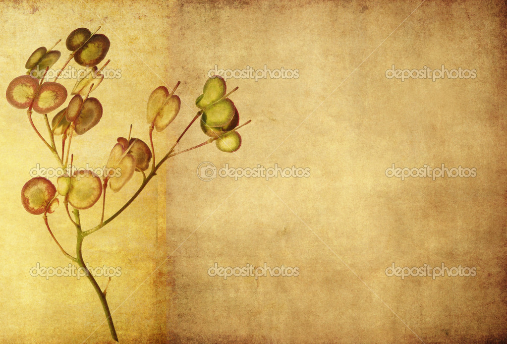 Earthy floral background and design element  Stock Photo #11556241