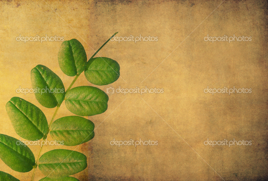 Earthy floral background and design element — Stock Photo #11556248