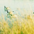 Lovely illustration of two canadian geese in a canal in london, england — Stock Photo #11673561
