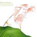 Summer flora — Stock Photo #11818379
