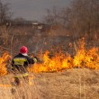 Burning of grass. Fire. — Foto de Stock