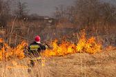 Verbranding van gras. brand. — Stockfoto