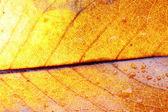 Vegetation textures scene — Stock Photo