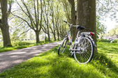 Bicycle in the park — Stock fotografie