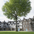 Tudor Style Building and tree in London, UK — Stock Photo #10742651