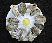Oysters the Dozen — Stock Photo