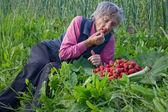 Granny eats strawberries — Stock Photo